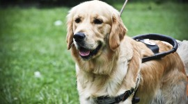 Guide-Dog Best Wallpaper