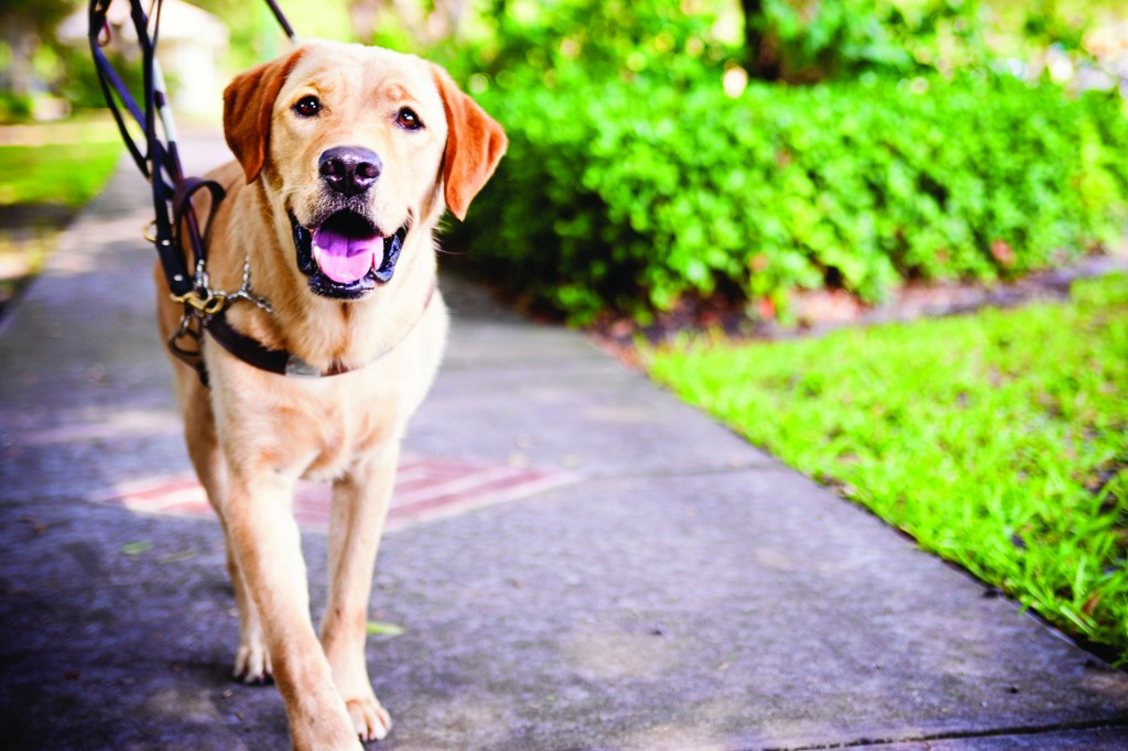 Guide-Dog wallpapers HD