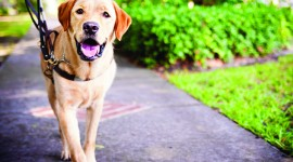 Guide-Dog High Quality Wallpaper