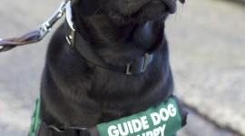 Guide-Dog Wallpaper For Android