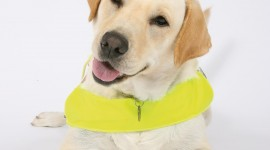 Guide-Dog Wallpaper For IPhone Free