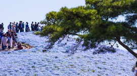 Hitachi National Park Best Wallpaper