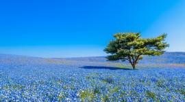 Hitachi National Park Desktop Wallpaper
