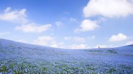 Hitachi National Park Wallpaper 1080p