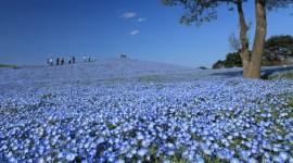 Hitachi National Park Wallpaper Download Free