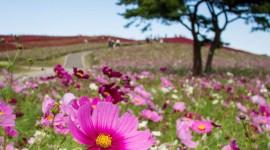Hitachi National Park Wallpaper For IPhone