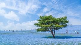 Hitachi National Park Wallpaper Gallery