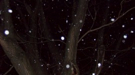 It's Snowing Photo Download
