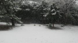 It's Snowing Wallpaper
