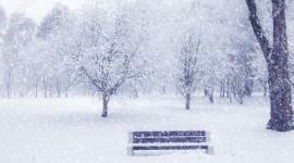 It's Snowing Wallpaper Free