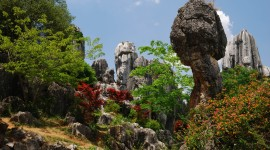Karst Forest Shilin In China Wallpaper High Definition