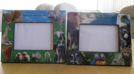 Lion Frames Photo
