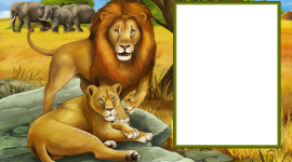 Lion Frames Wallpaper Gallery