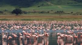 Ngorongoro Crater Lodge Desktop Wallpaper HD