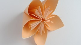 Paper Flowers Photo#1