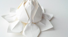 Paper Flowers Photo#2