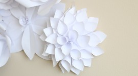 Paper Flowers Photo#3