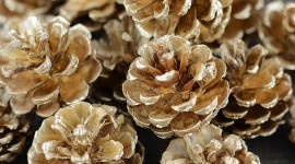 Pine Cones Wallpaper For Android
