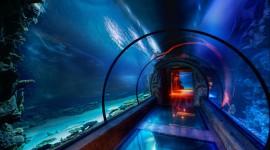Poseidon Undersea Wallpaper 1080p
