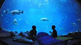 Poseidon Undersea Wallpaper Download