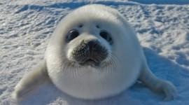 Seal Photo