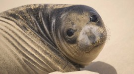 Seal Photo Free