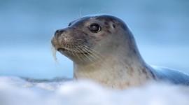 Seal Photo#1
