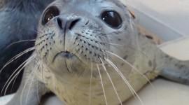 Seal Photo#2