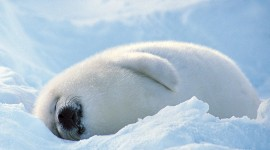 Seal Photo#3