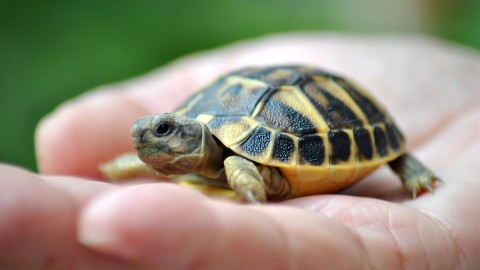 Small Turtles wallpapers high quality