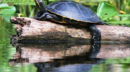 Small Turtles Photo