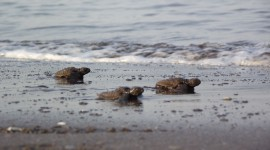 Small Turtles Photo Download