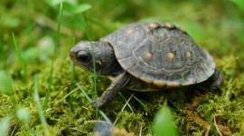 Small Turtles Photo Free#1
