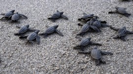 Small Turtles Wallpaper Download