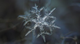 Snowflake Macro Wallpaper Download