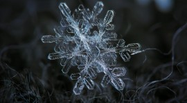 Snowflake Macro Wallpaper Download Free