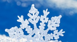 Snowflake Macro Wallpaper For IPhone Free