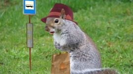 Squirrels With Hats Photo