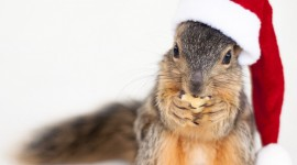 Squirrels With Hats Wallpaper