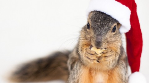 Squirrels With Hats wallpapers high quality