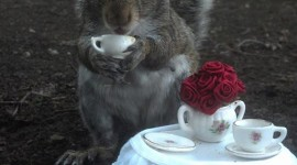 Squirrels With Hats Wallpaper For Android#1