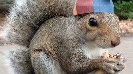 Squirrels With Hats Wallpaper For IPhone#2