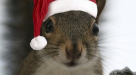 Squirrels With Hats Wallpaper For IPhone#3
