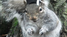 Squirrels With Hats Wallpaper Full HD