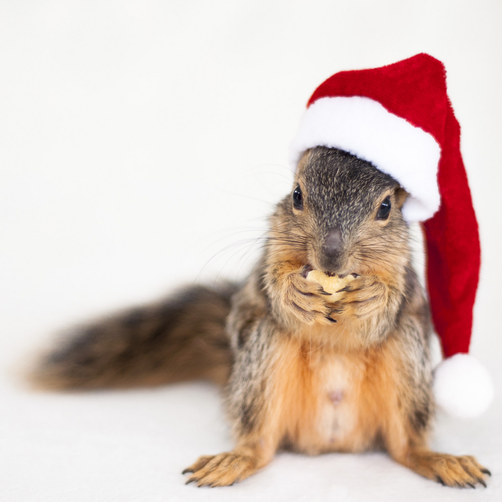 Squirrels With Hats wallpapers HD