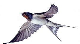 Swallow Aircraft Picture