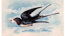 Swallow Image