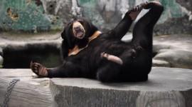 The Malay Bear Wallpaper Full HD