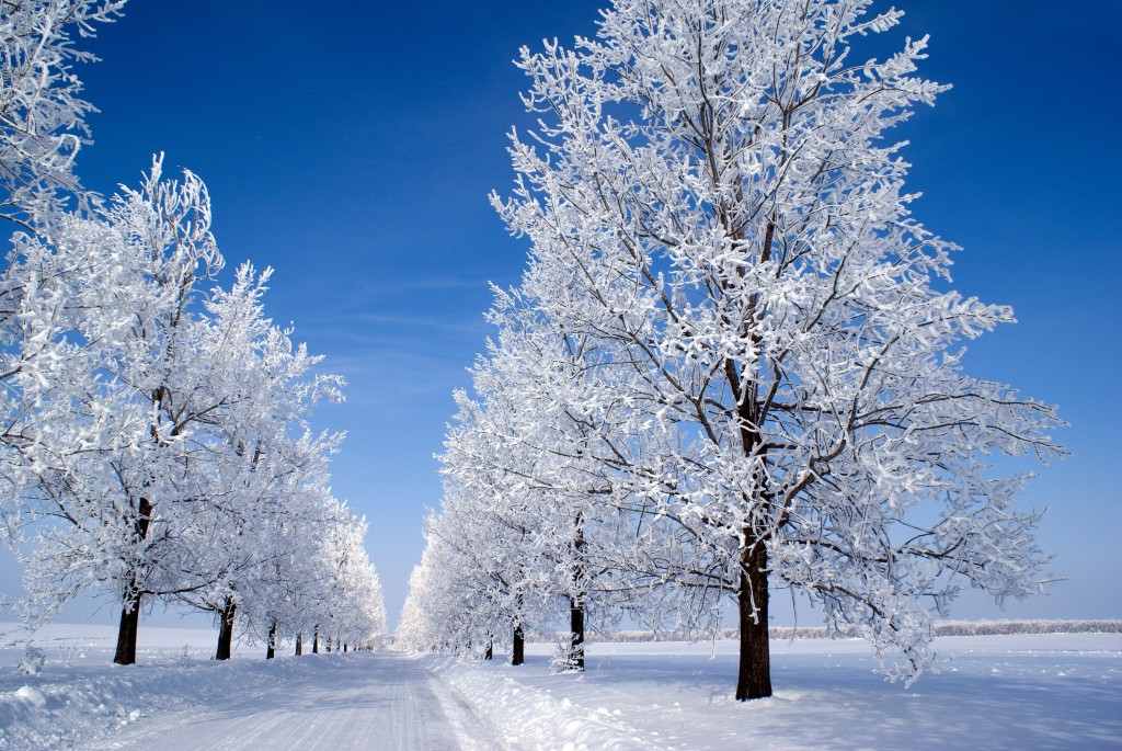 Trees In The Snow wallpapers HD