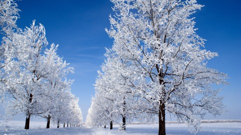 Trees In The Snow wallpapers high quality